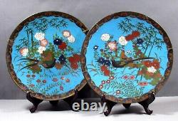 Japanese Cloisonne Chargers (2) MEIJI PERIOD