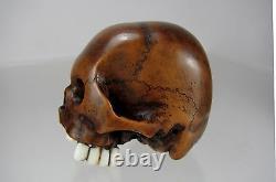 TOMOCHIKA, Edo School Boxwood Netsuke Naturalistic Human Skull